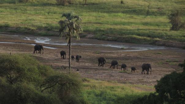 The view from the patio at Tarangire Safari Lodge